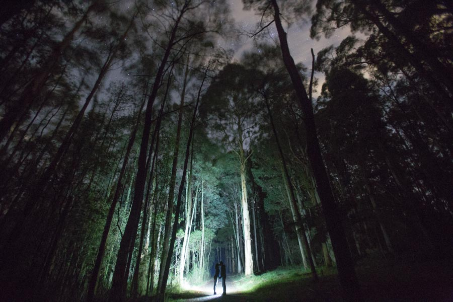 Couple photography in the Dandenong Ranges