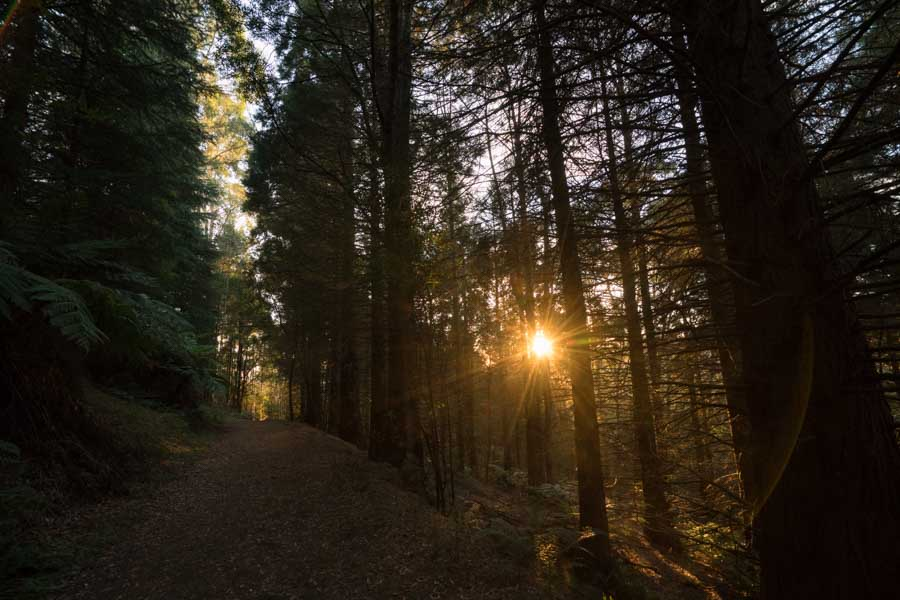 the most beautiful sunrise in the Dandenong Ranges