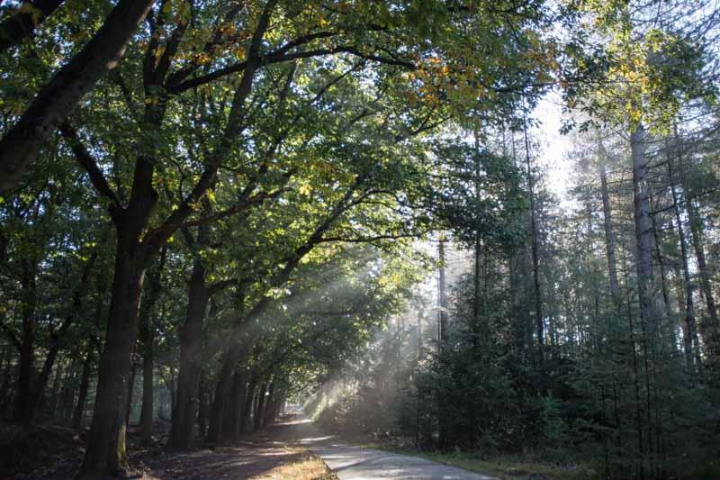 morning sunshine in Hoge Veluwe National Park