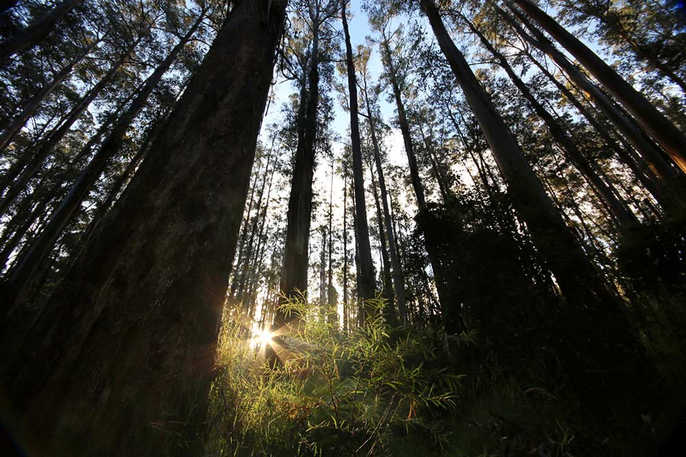 Sunset over Sherbrook forest, Dandenong Ranges, Vic, ©Erika's Way Photography