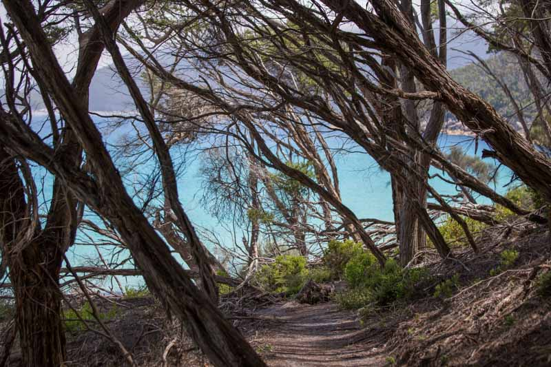 Wilson's Prom National Park, South Eastern Circuit ©Erika's Way Photography