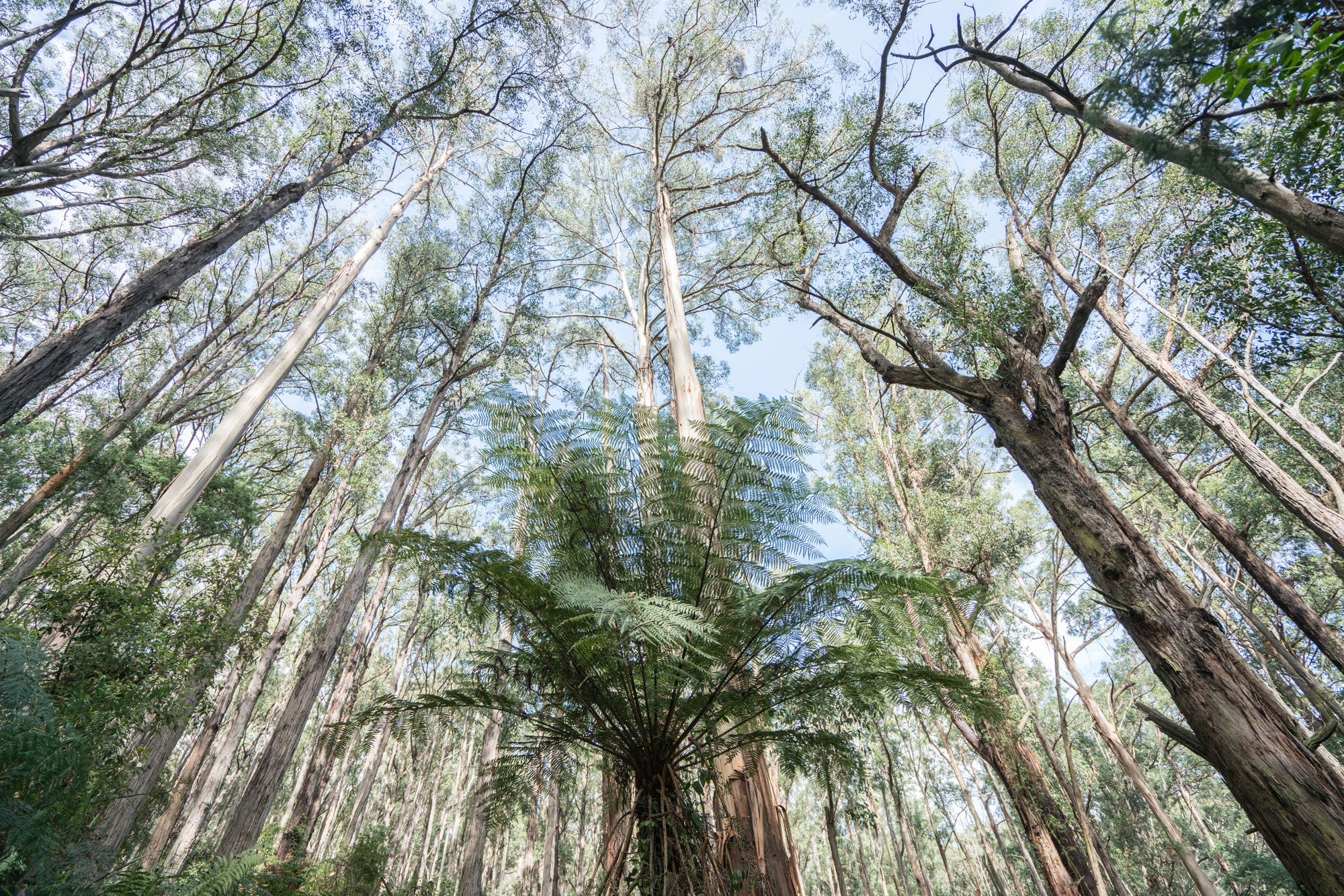 Dandenong Ranges Forest. Photo by Erika's Way Photography