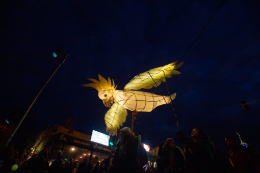 Cockatoo Lantern