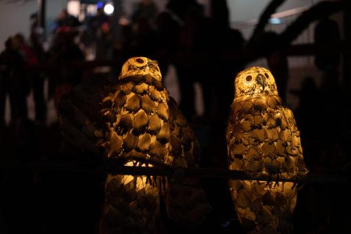 Owls couple Lantern