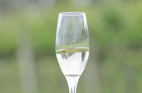 A glass of Champagne in the vineyard. Details and memories from the Wedding day. © Erika's Way Photography